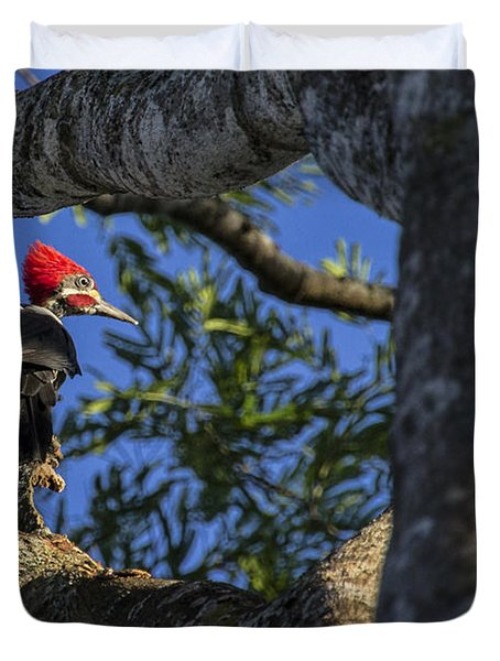 Woody Woodpecker Duvet Cover