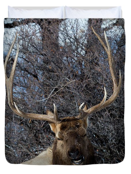 Wyoming Elk Duvet Cover