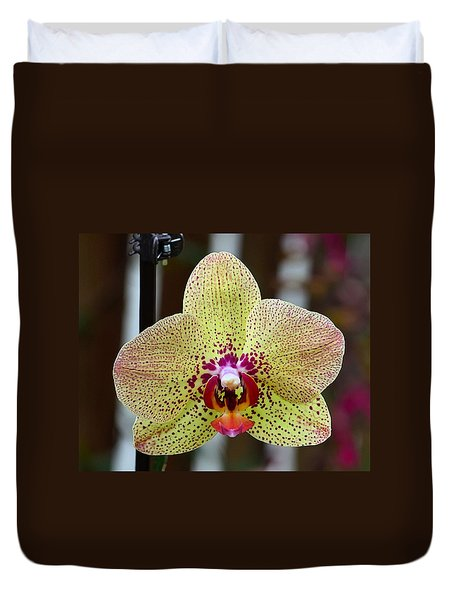 Yellow And Maroon Orchid Duvet Cover