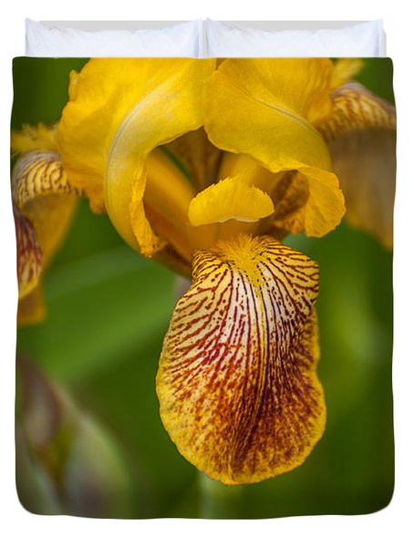 Yellow Bearded Iris Duvet Cover by Brenda Jacobs