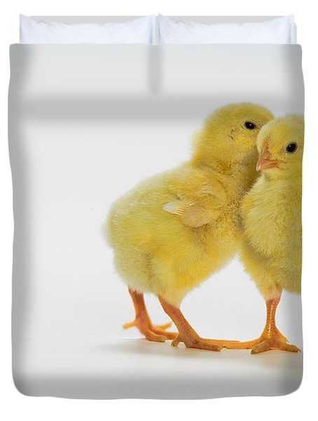 Yellow Chicks. Baby Chickens Duvet Cover by Thomas Kitchin & Victoria Hurst