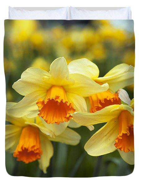 Yellow Daffodils Duvet Cover by Peter French