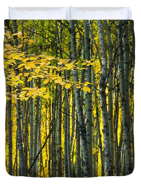Yellow Fall Birch Leaves Against An Duvet Cover by Joel Koop