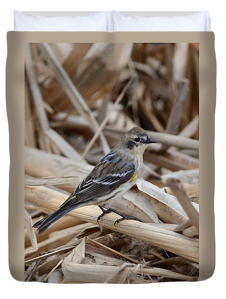 Yellow-rumped Warbler Duvet Cover by Debra Martz