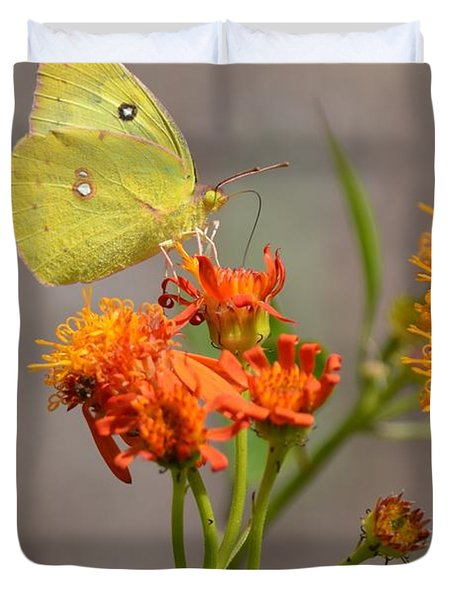 Yellow Sulphur Butterfly Duvet Cover by Debra Martz