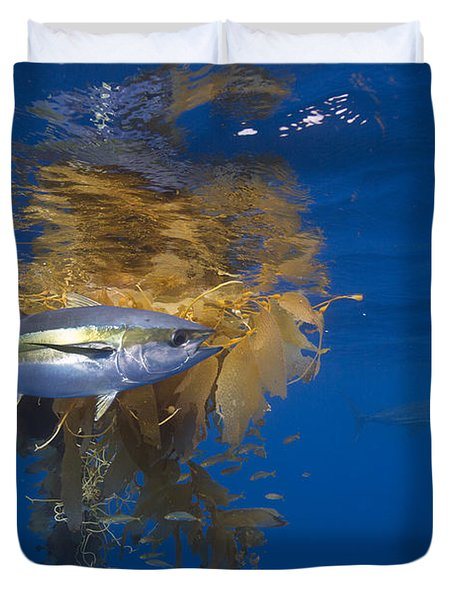 Duvet Cover featuring the photograph Yellowfin Tuna And Kelp Nine-mile Bank by Richard Herrmann