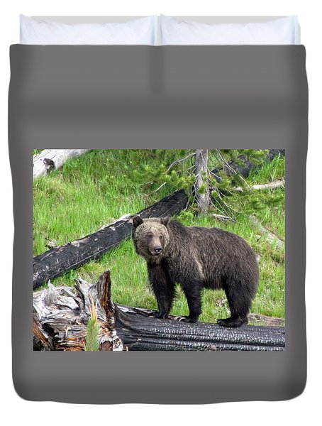 Yellowstone Grizzlies 2 Duvet Cover by George Jones