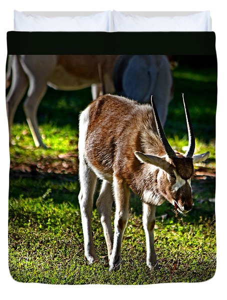 Youngster Addax Duvet Cover