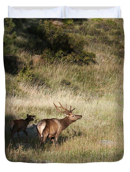 Young Bull Elk Duvet Cover