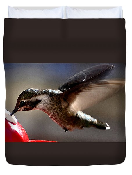 Duvet Cover featuring the photograph Young Hummingbird Male Anna by Jay Milo