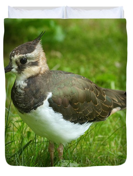 Young Lapwing Duvet Cover