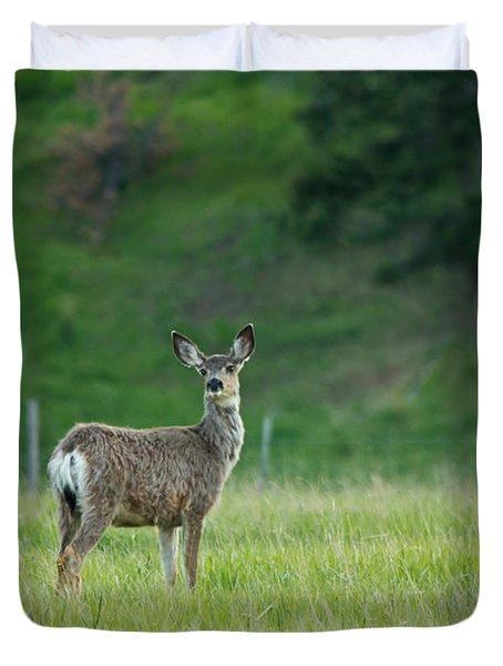 Young Mule Deer Duvet Cover by Eti Reid