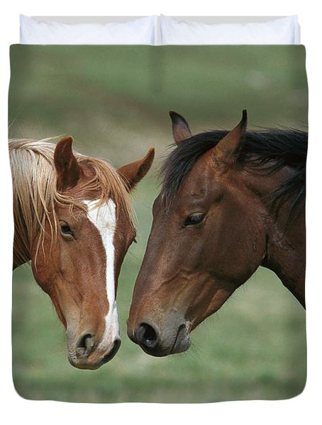 Young Mustang Bachelor Stallions Duvet Cover