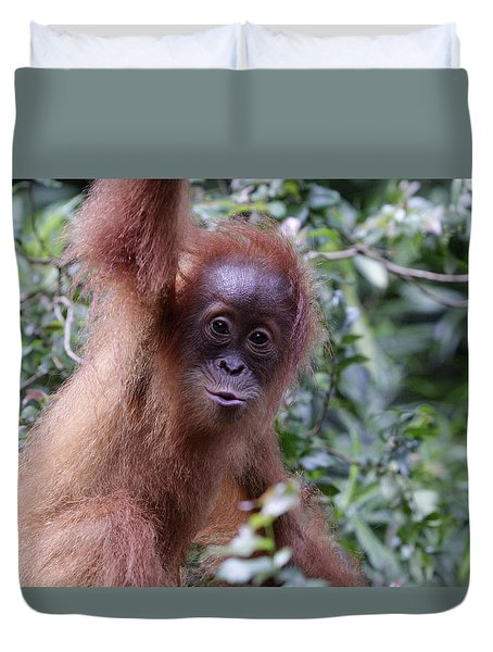 Duvet Cover featuring the pyrography Young Orangutan Kiss by Shoal Hollingsworth