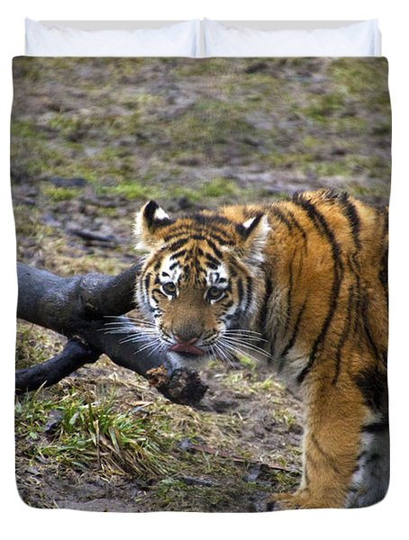 Young Tiger Duvet Cover by Thomas Woolworth