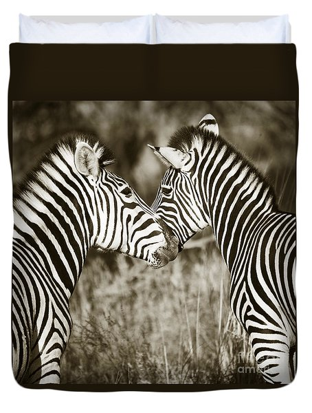Zebra Affection Duvet Cover