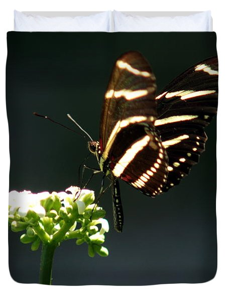 Zebra Longwing Duvet Cover by Greg Allore
