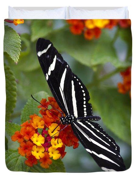 Zebra Longwing On Lantana Duvet Cover by Saija  Lehtonen