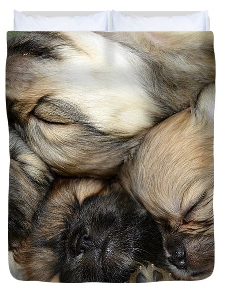 The Gang   Cute Puppies Duvet Cover by Peggy Franz