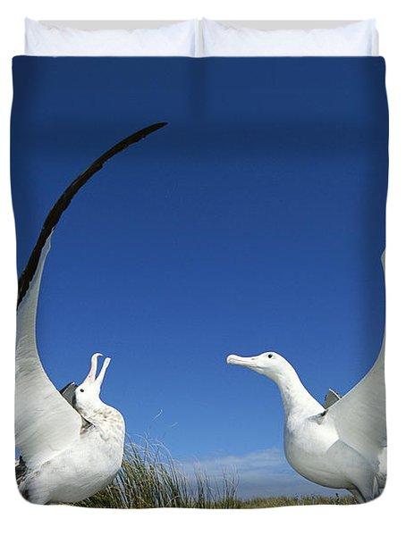 Antipodean Albatross Diomedea Duvet Cover by Tui De Roy