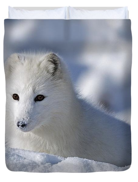 Arctic Fox Exploring Fresh Snow Alaska Duvet Cover by David Ponton