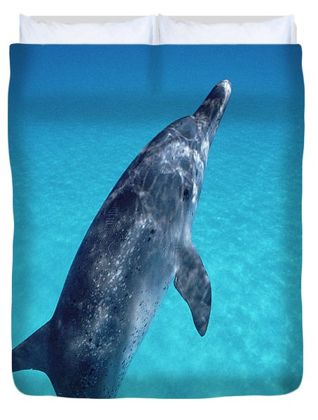 Atlantic Spotted Dolphin Portrait Duvet Cover by Flip Nicklin