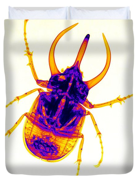 Atlas Beetle X-ray Duvet Cover by Ted Kinsman