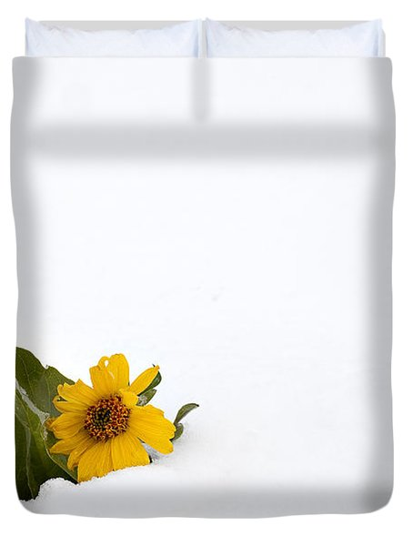 Balsamroot In Snow Duvet Cover by Hal Horwitz and Photo Researchers