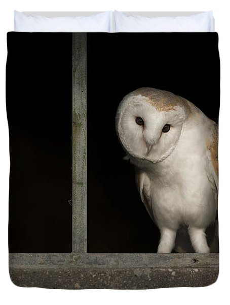 Barn Owl In Window Duvet Cover