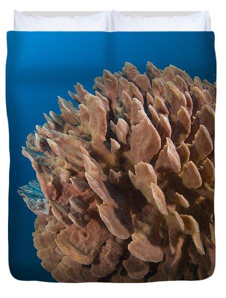 Barrel Sponge And Diver, Papua New Duvet Cover by Steve Jones