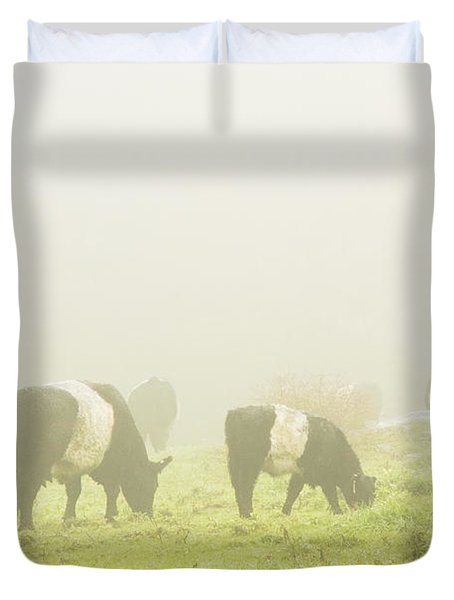 Belted Galloway Cows Grazing On Foggy Farm Field Maine Duvet Cover by Keith Webber Jr