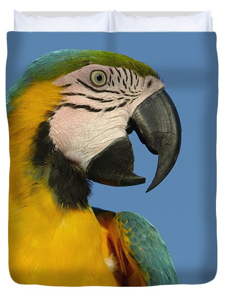 Blue And Yellow Macaw Ara Ararauna Duvet Cover by Pete Oxford