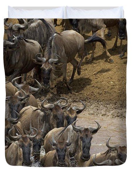 Blue Wildebeest Connochaetes Taurinus Duvet Cover by Suzi Eszterhas
