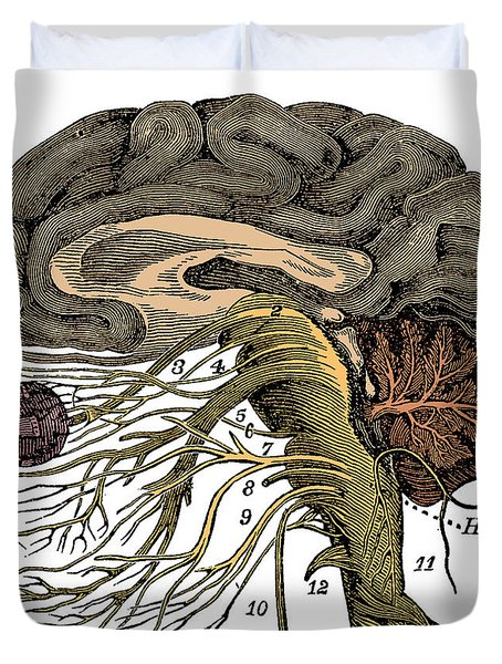 Brain And Cranial Nerves Duvet Cover