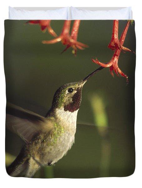 Broad Tailed Hummingbird Feeding Duvet Cover