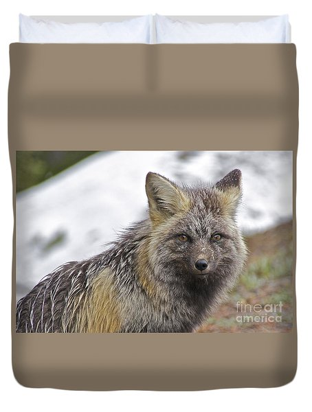 Cascade Red Fox Duvet Cover by Sean Griffin