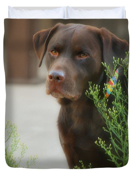 Chocolate Labrador - Womans Best Friend Duvet Cover by Donna Greene