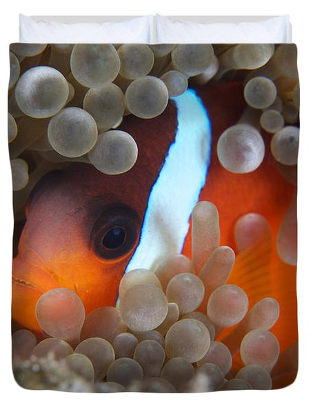 Cinnamon Clownfish In Its Host Anemone Duvet Cover