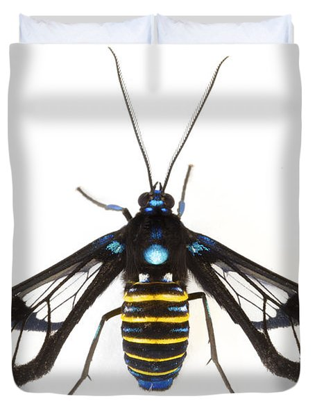 Clearwinged Tiger Moth Tapanti Np Costa Duvet Cover by Piotr Naskrecki