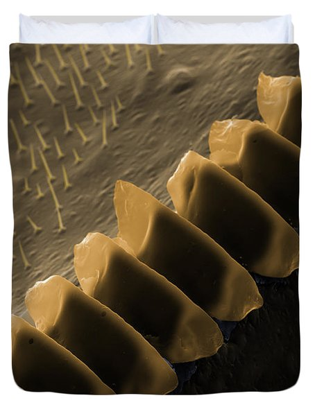 Cricket Sound Comb, Sem Duvet Cover by Ted Kinsman