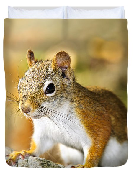 Cute Red Squirrel Closeup Duvet Cover