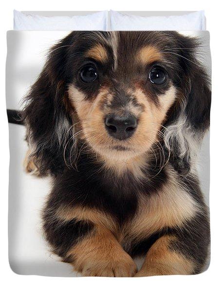 Dachshund Pup Duvet Cover by Jane Burton