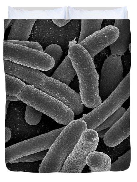 Escherichia Coli Bacteria, Sem Duvet Cover by Science Source