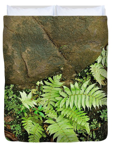 Ferns Duvet Cover by Michael Peychich