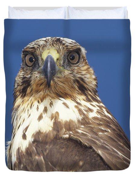 Galapagos Hawk Buteo Galapagoensis Duvet Cover by Tui De Roy