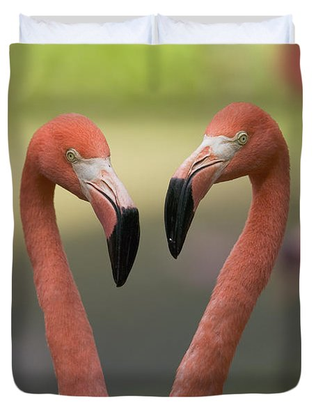 Greater Flamingo Phoenicopterus Ruber Duvet Cover