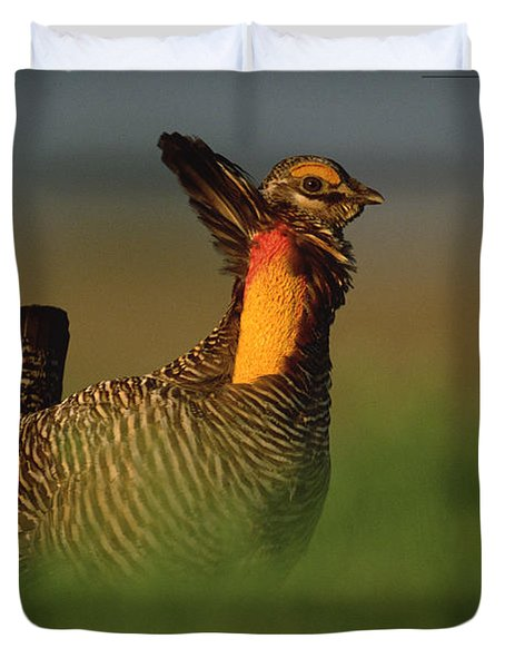 Greater Prairie Chicken Male Duvet Cover by Tim Fitzharris