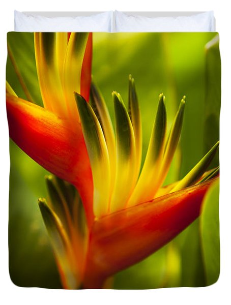 Heliconia Duvet Cover by Dana Edmunds - Printscapes