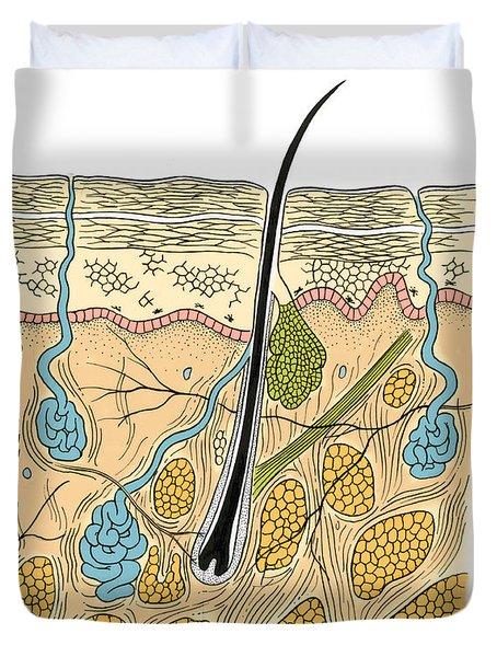 Illustration Of Skin Section Duvet Cover