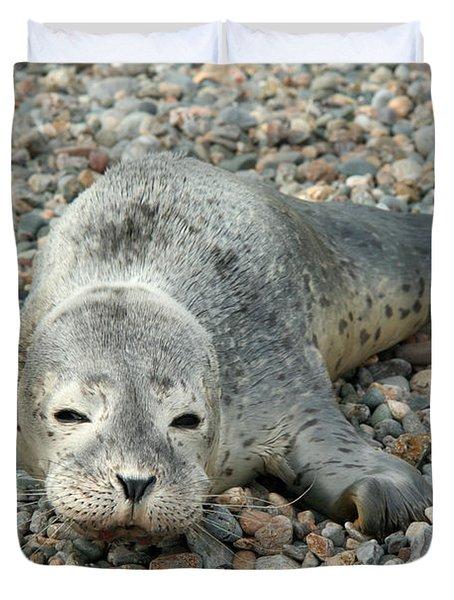 Injured Harbor Seal Duvet Cover by Ted Kinsman